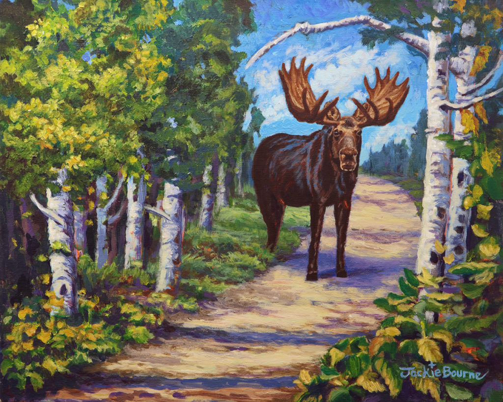 Moose-on-path-in-forest-with-birch-trees