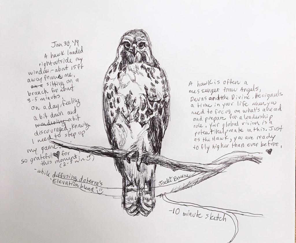 hawk-on-branch-drawing-jackie-bourne-art
