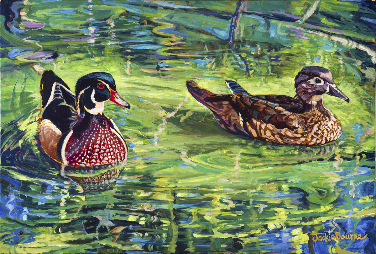 Wood-ducks-in-lagoon-with-reflections-in-water